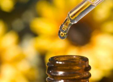 ravensara essential oil for aromatherapy