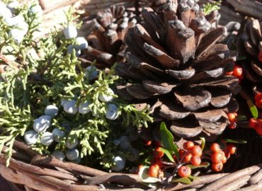 Pines Cones & Juniper Berries for Decorating Your Home for the Holidays, copyright Sharon Falsetto, all rights reserved