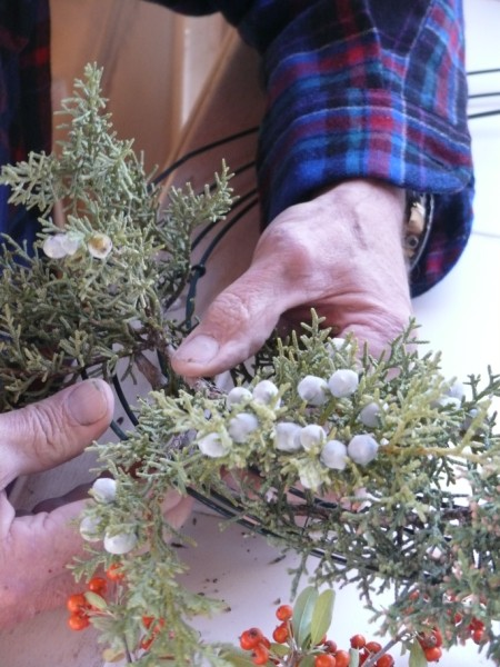 Simply attach your plant material onto the wreath frame with the florist wire.... (copyright Sharon Falsetto, all rights reserved)