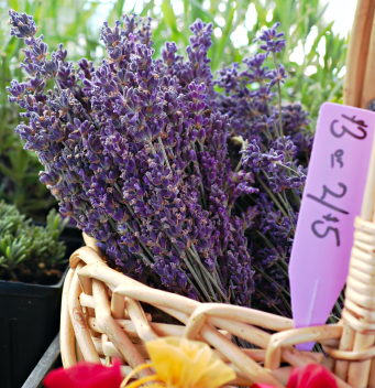 Aromatherapy Study in France, istockphoto, used with permission