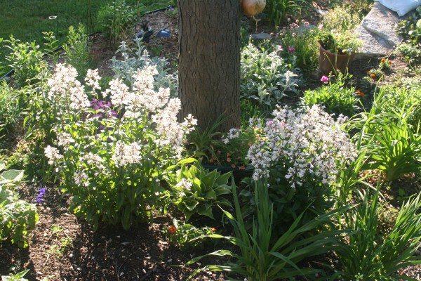 A Multipurpose Cutting Garden, Chuck Eirschele