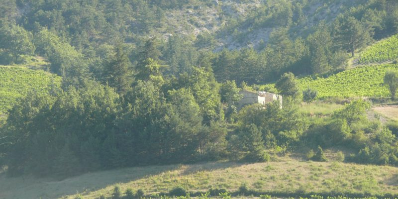 Aromatherapy Plants in the South of France