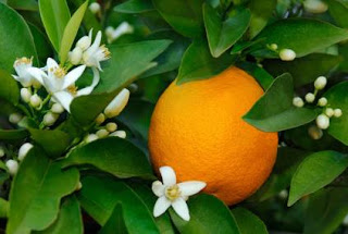 Different types of orange essential oil, ISP