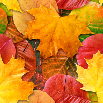 Natural Scents for Fall: Photo credit ISP