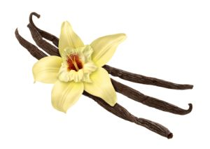 Vanilla as an Absolute and Essential Oil: Photo Credit, ISP