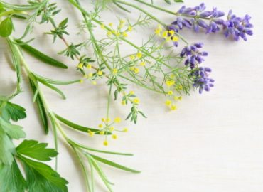 Botanical Plant Families in Aromatherapy: Photo Credit, ISP