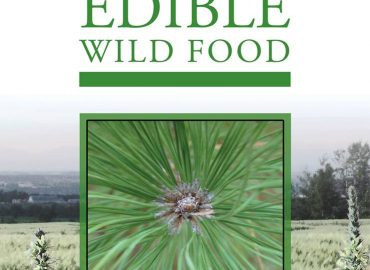 Wild Edible of the Month: Pinus spp. : Photo copyright Karen Stephenson (used with permission)
