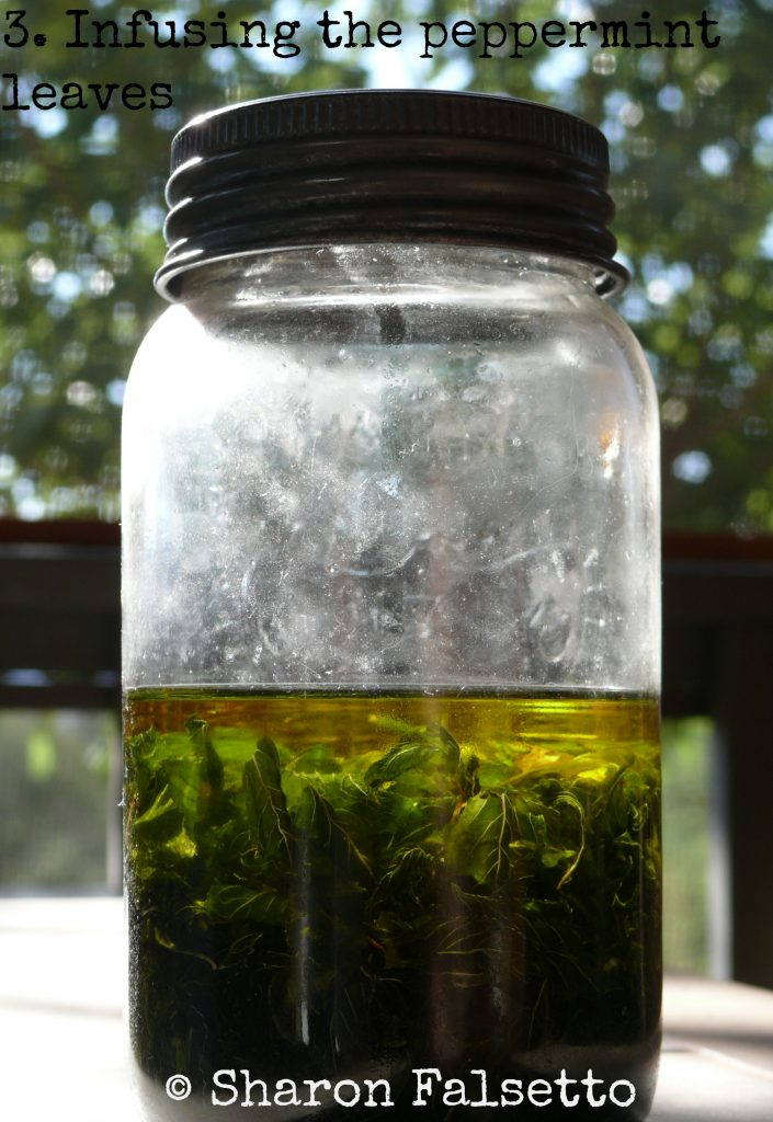 How to Infuse Peppermint in a Vegetable Oil