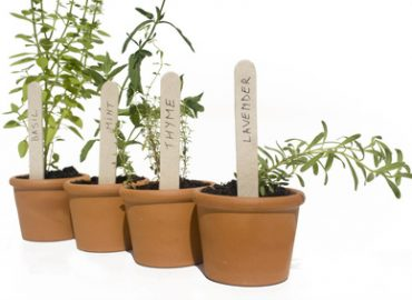 Herbs as Essential Oils: Photo Credit, Fotolia
