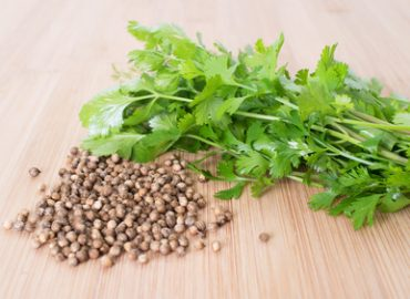 Cilantro and Coriander (Seeds): Photo Credit, Fotolia