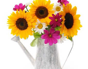 Sunflowers and Daisies of the Asteraceae Plant Family: Photo Credit, Fotolia