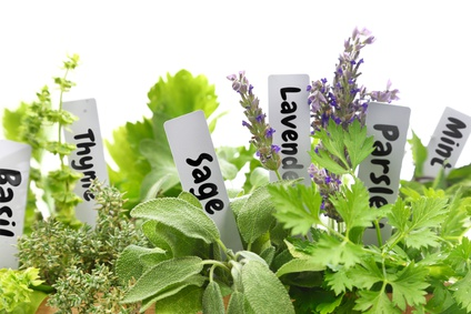Aromatic Plant Terms: Photo Credit, Fotolia