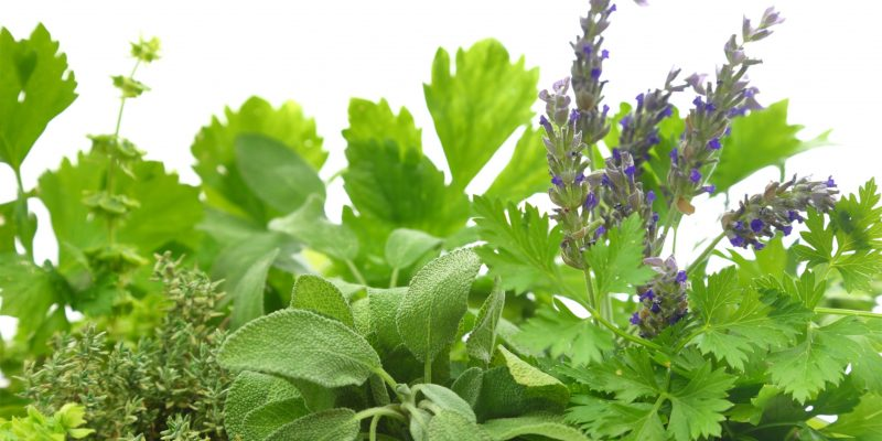 Chemotypes of Herbs for Essential Oils