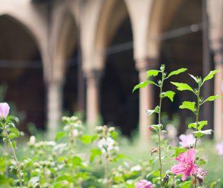 Medieval Cloister Garden: Photo Credit, Dreamstime