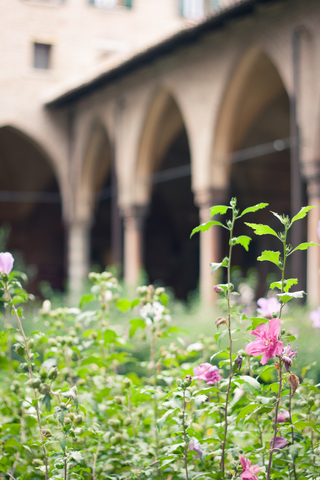 Medieval Cloister Garden: Photo Credit, Dreamstime