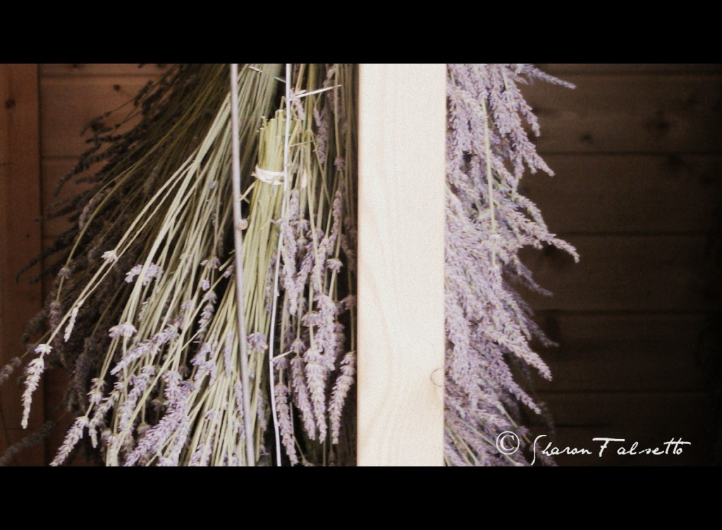 Drying Lavender: Photo Copyright Sharon Falsetto, All Rights Reserved
