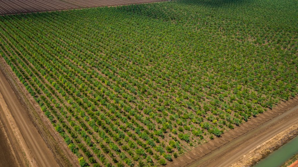 View of New Sandalwood Plantation from the Air: Used with Permission of Santanol