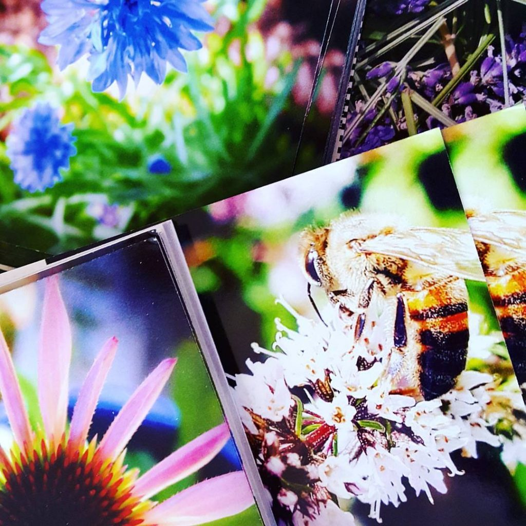 Aromatic Note Cards by Sharon Falsetto: All Rights Reserved