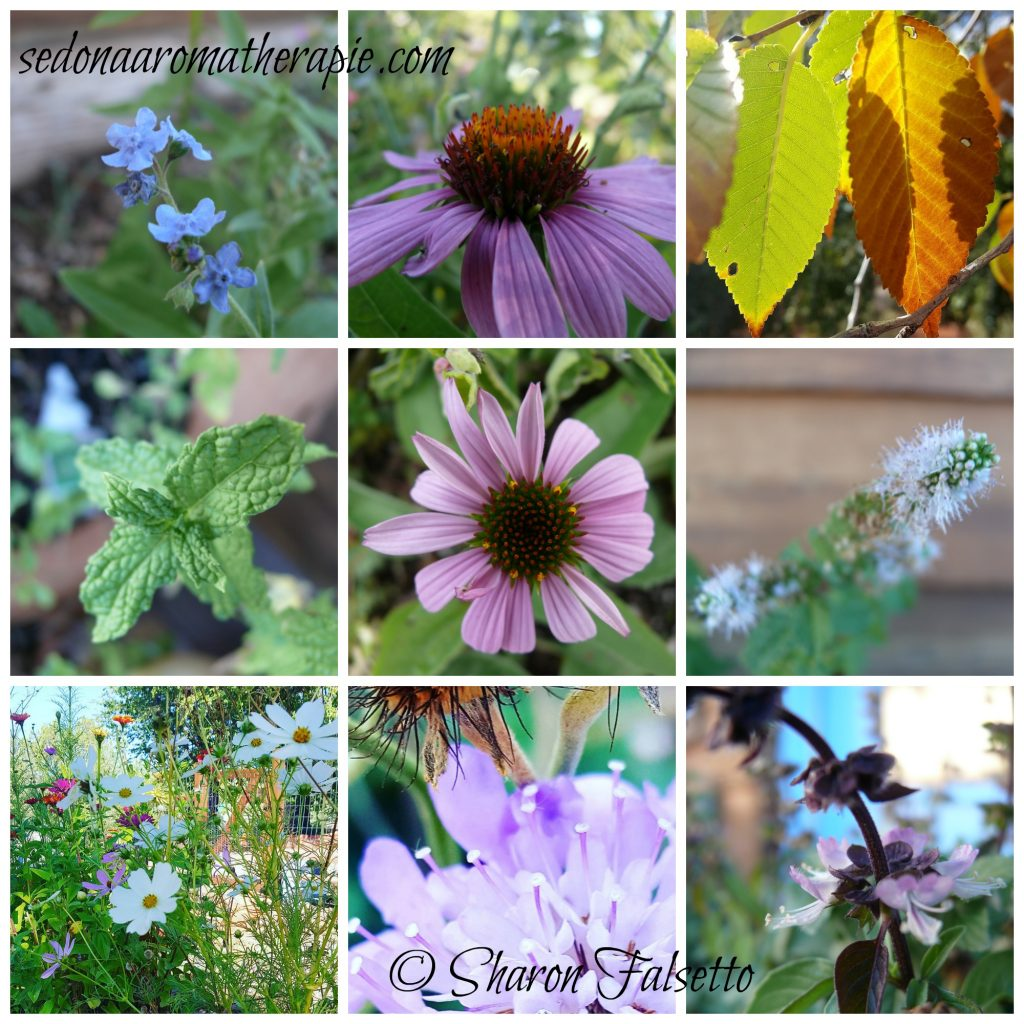 The Healing Garden: Photo Copyrights Sharon Falsetto All Rights Reserved