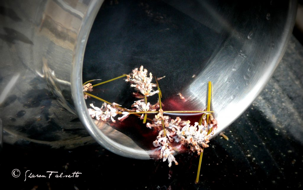 Aromatic Distilling of Plants for Oils: Photo Copyright Sharon Falsetto All Rights Reserved