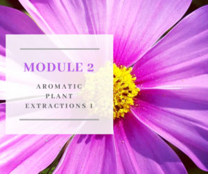 Certificate in Holistic Aromatherapy Module 2