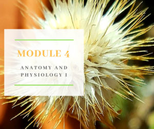 Certificate in Holistic Aromatherapy Module 4