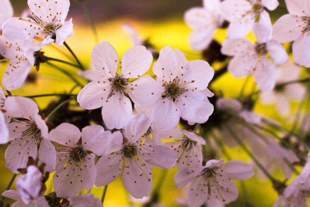 Aromatherapy Blends for April