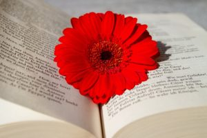 education aromatherapy consultation