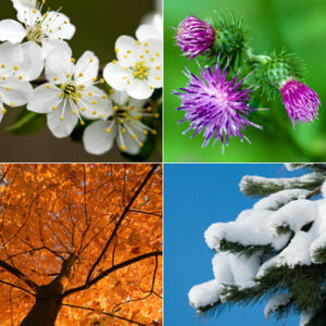 15 Seasonal Aromatherapy Blends Ebook