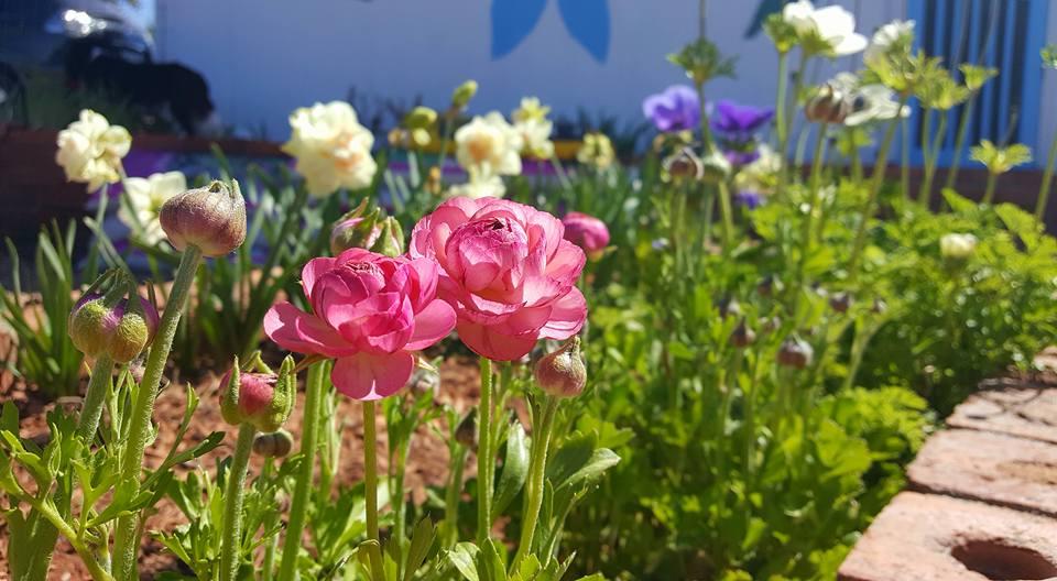 Botanical Aromatherapy Programs