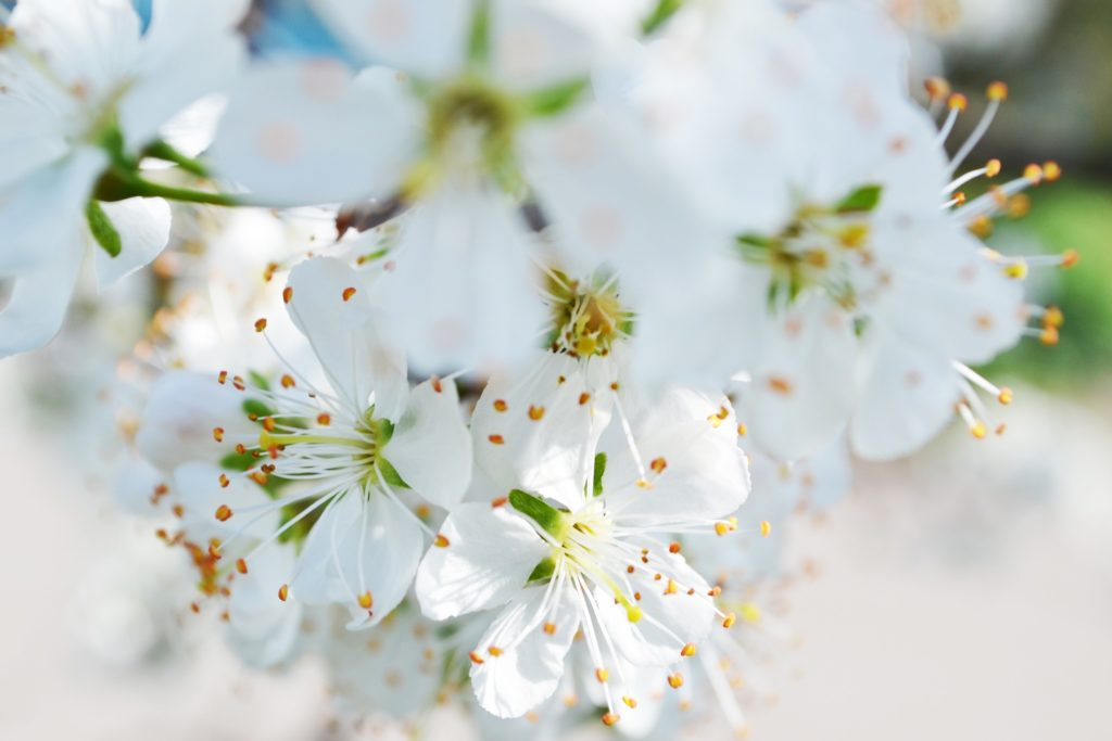Aromatherapy Blends for May