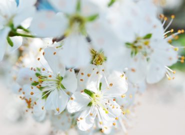 aromatic blends for may 2018