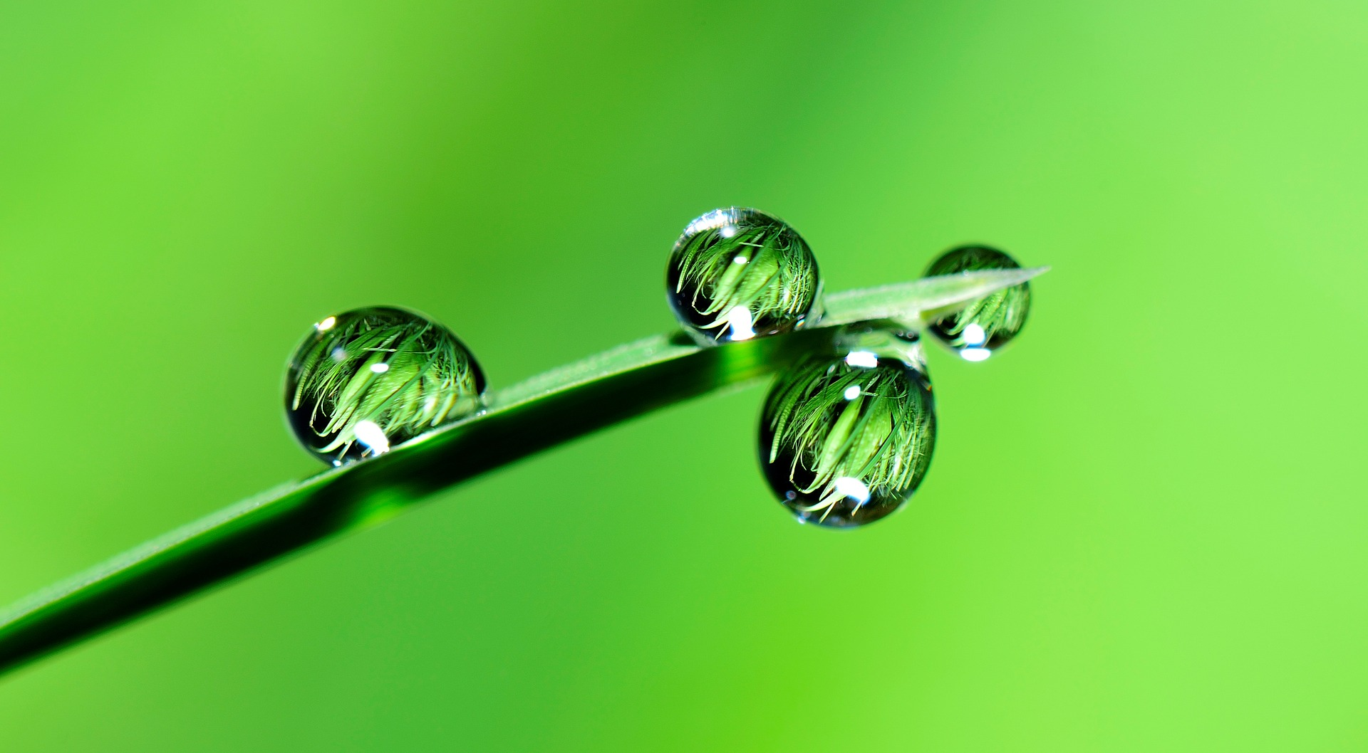Hydrosols as Toners for Skincare