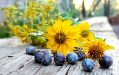 Autumn Scents from the Garden